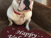 Stella says Happy Valentine's Day ❤️