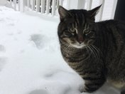 My snow cat, Nashua
