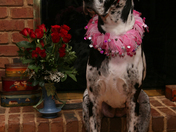 Lainey Dressed for Valentines Day