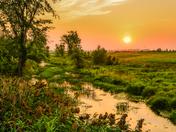 Swamp rising