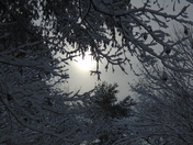 Sun rising over trees