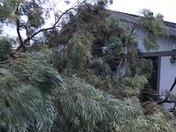 Hollister Trees Down