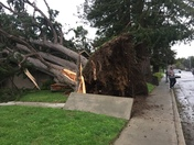 Tree Down on 45th Avenue in Capitola