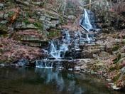 Wild ccat falls