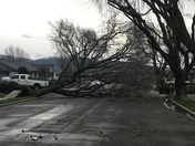 Pictures from the Storm