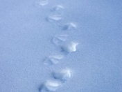 Winter Waddle Prints