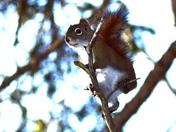 Squirrel twiggy