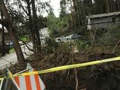 Fallen tree root ball Fairway Drive Soquel