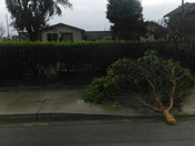 Salinas storm damage