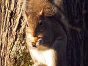Morning Squirrel.
