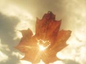 Maple Leaf love