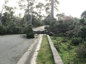 Trees are still falling in Pacific Grove