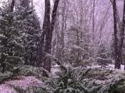 Snow starting to stick in Cedar Ridge