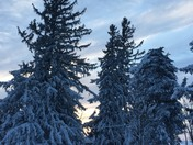 Pretty sunset and trees after snow