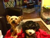 Ollie and Lulu