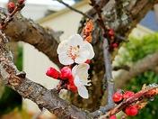 Signs of Spring in Auburn, CA