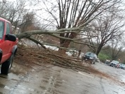Down tree in Crittenden Ky