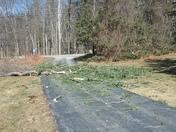 Tree down in goffstown driveway