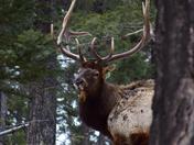 Lawrence Elk