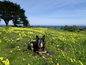 Riley in Pacific Grove