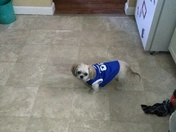 Our dog love Kentucky wildcats