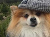 """Girl Pomeranian is """"Mia"""" Boy Pomeranian is Tucker"""