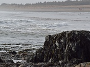 Seaweed, Waves and Sand