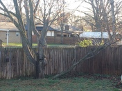 Broken branch from storms 3/6/17