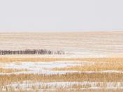 The Prairies (8736)