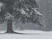 Tree and Snow (2435)