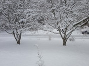 Snow in centerville ma 02632