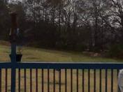 Snow in Anderson sc