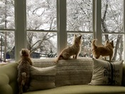 Puppies watching the snowfall at Hidden Valley Farm in Inman, SC