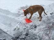 Cooper helping to shovel