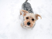 Dog Snow Day