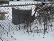 Taz loves the snow