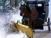 Horse buggy with plow