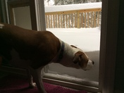 Bella looking out at the snow from the deck