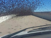 Driving with Birds
