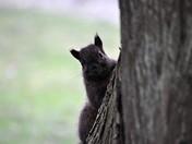Peek-a-boo squirrel