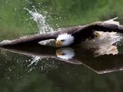 Extreme Eagle