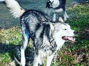 Bane and Lobo
