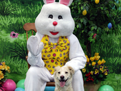 Daisy and the Easter Bunny.