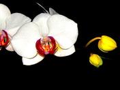 Sun on Orchids