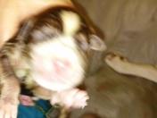 My dog sasha had 8 puppies on national puppy day