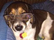 Bubsy wearing daddy's glasses