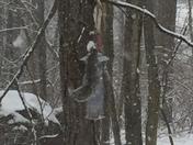 Snow in Milton