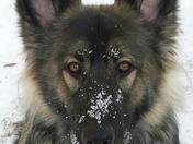Lexi shiloh shepherd