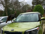 Get off my car you Turkey!
