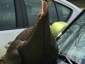Shoo Bird!